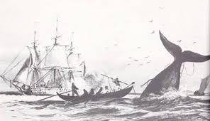 Illustration de chasse à la baleine Otava Yo Pique la baleine
